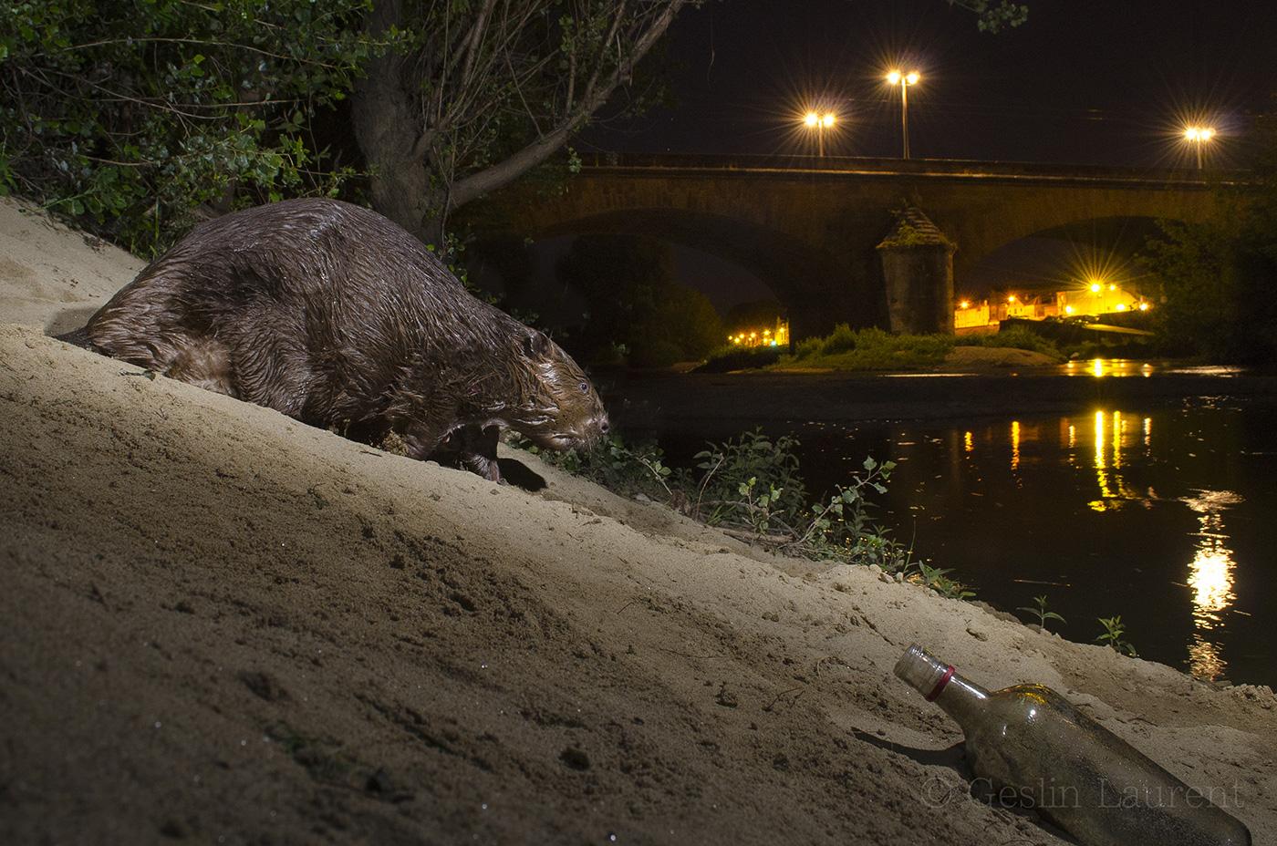 Urban Wildlife Laurent Geslin