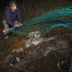 Member of the KORA, NGO specialized on predators in Switzerland, capturing a female lynx for translocation in Austria.