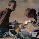 Ethiopian-Wolf_Laurent-Geslin_04