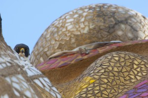 Peregrine falcon (Falco peregrinus) on one of the Sagrada familia cathedral spires, designed by Gaudi, Barcelona, Spain