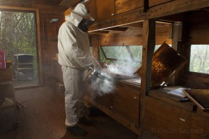 Bees-Colony-collapse-disorder_Laurent-Geslin_12