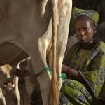 Mauritanian-refugees_Laurent-Geslin_19